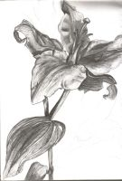 Tonal Lily by CheeseWarrior