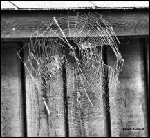 Spider's Web by PatriciaRodelaArtist