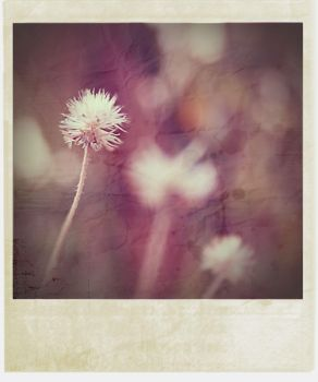 .polAroid26 by HerSPACEh0liday