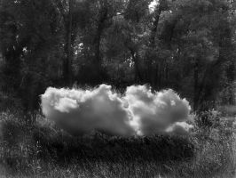 cloud invasion in trees by ChrisKaan