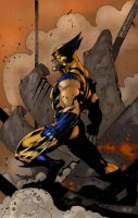 Wolverine by Ronron84