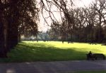 Hyde Park by mrpunch
