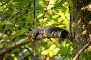 Project 365 - 149 - Lazy Summer Day by jguy1964