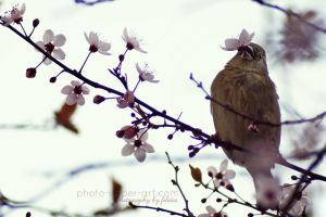 I bring you spring by FeliDae84