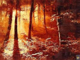 the sun in the forest by imageking10