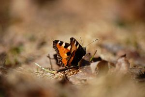 Butterfly by AnnaMariaHolm