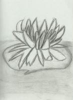 Water Lily by SeeMooreDesigns