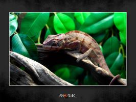 NOT HAPPY by ANOZER