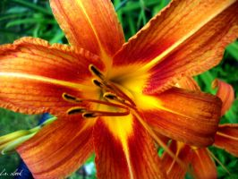 tiger lily by cheergirl2015