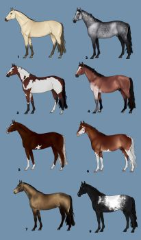 Horse adopts by decors