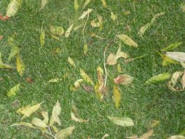 grass and leaves by joelshine-stock