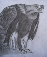 eagle by me3xR