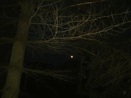 Nighttime in the Woods by SacredJourneyDesigns