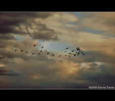 Geese on a Cloudy Day by DwayneF