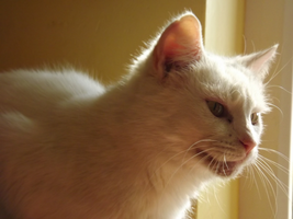 Bailey the cat by TomRolfe
