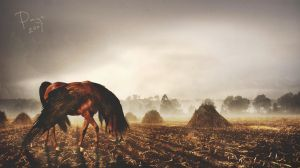 the nomad by paigehpleuvoir
