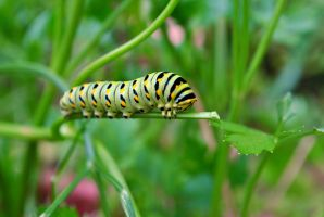 Catepillar Of The Anesthetic by jessebeans