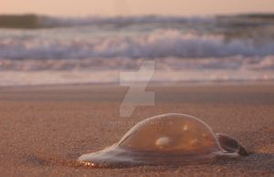jellyfish by CrisBee