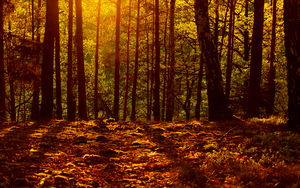 Forest Sunset by salmanarif