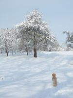 Snow with trees3 by archaeopteryx-stocks
