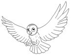 Barn Owl Lineart by Xbox-DS-Gameboy