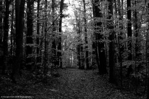 Into the Light by jltrafton