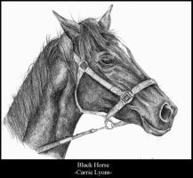 Black Horse by carriephlyons
