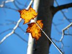 2 Orange Leaves by Michies-Photographyy
