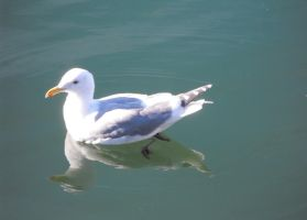 Seagull On The Water II by Photos-By-Michelle