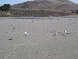 Beach: Flock of Seagulls2 by sc4mp1