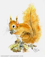 Squirrel by VinceSwift
