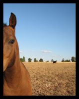 Foreground Horse by vertis