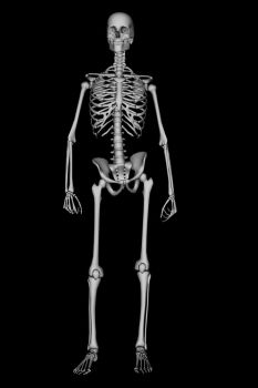 Skeleton 1 by SB-Photography-Stock