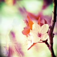 Spring is fading... by cosmogurl