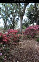 Bok Tower Gardens Stock 12 by Cassy-Blue
