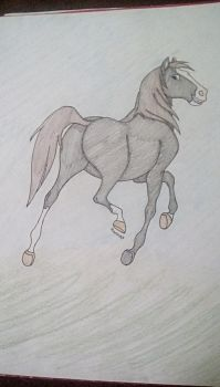 A horse drawing by hanna0304