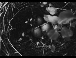 Eggs in Nest by Reilune