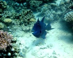 Saltwater fish by Dracofemi