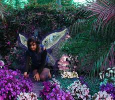 Faeries in the Flowers by coralmcmurtry