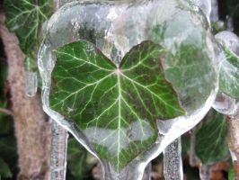 iced green leaf by Symphonicon