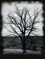 The Tree by IrenaT