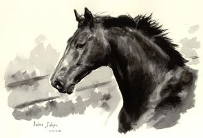 Horse - ecoline by AndreaSchepisi
