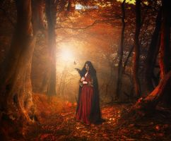 .:: Autumn Comes ::. by iebe