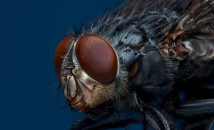 Mr Fly by mant01