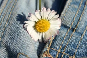 Denim and Daisies III by JinxedKitten
