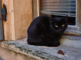 black cat and orange window by floratrap