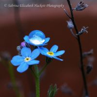 The World On A Forget Me Not II by Hitomii