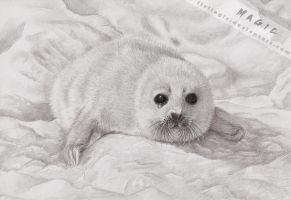 Look Again, Baby Seal by llvllagic