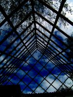 Iron Cage by Pickley