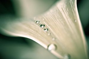 Raindrops .01 by In5omn1ac